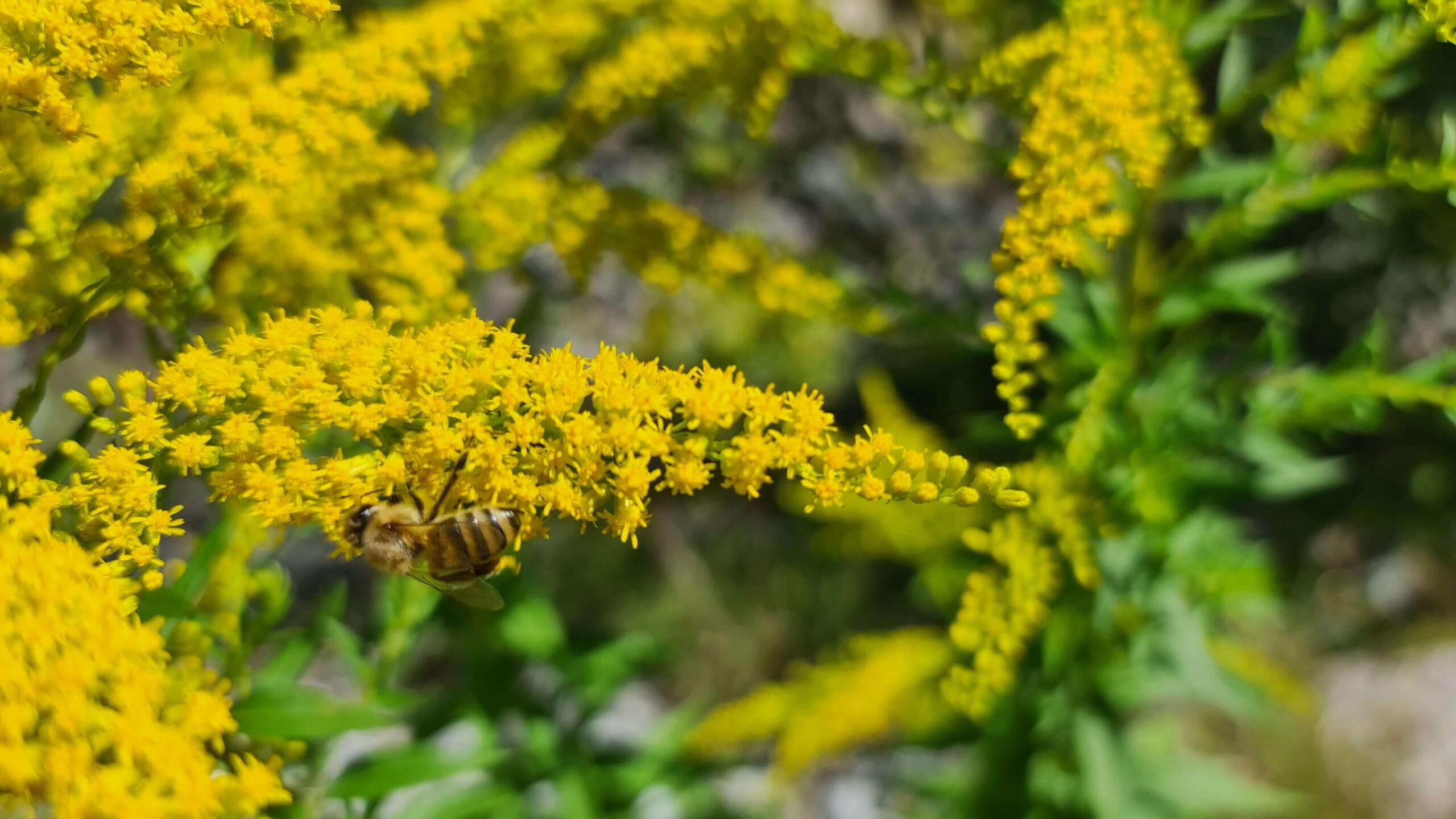 © Biene aus dem Gailtal Business-Network